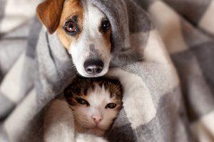 insulation-petsinwinter_726710044